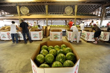 Packing Watermelons